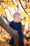 Baby boy sitting on a branch Royalty Free Stock Photography
