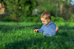 Baby boy sitting among green grass on spring lawn Stock Image
