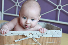 Baby boy sitting and smiling in basket, purple background Stock Image