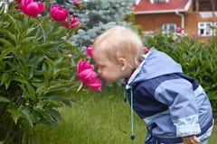 Baby boy smelling giant rose Stock Image