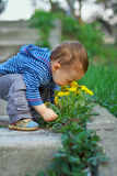 Baby boy sniffing dandelions in spring park. Cute baby boy sniffing dandelion flowers in spring park Royalty Free Stock Photography