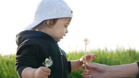 Baby boy standing with dandelion in a green field in summer. In a jacket and cap stock footage