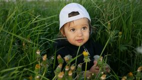 Baby boy standing with dandelion in a green field in summer. In a jacket and cap stock video footage