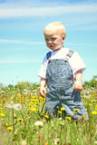 Baby boy standing in dandelions Royalty Free Stock Photography