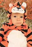 Baby boy tiger. Baby boy dressed in a tiger costume for halloween stock image