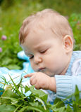 Baby boy touching grass and thinking Stock Photography