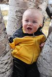 Baby boy in tree. Baby boy sitting in a tree stock images