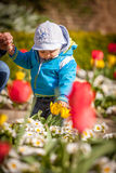 Baby boy with tulip Royalty Free Stock Photo