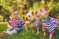 Baby boy and two yorkshire terrier Stock Photography