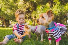 Baby boy and two yorkshire terrier Royalty Free Stock Photos