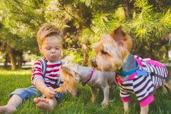Baby boy and two yorkshire terrier Royalty Free Stock Photography