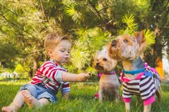 Baby boy and two yorkshire terrier Stock Photos