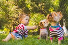 Baby boy and two yorkshire terrier Royalty Free Stock Image