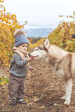 Baby boy in vineyard with husky dog Stock Images