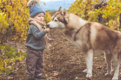 Baby boy in vineyard with husky dog Royalty Free Stock Photo