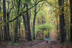 Baby boy walking through the autumn forest royalty free stock image