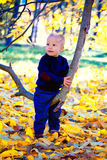 Baby boy in the woods Royalty Free Stock Images