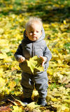 Baby boy with yellow autumn maple leaf. Portrait of toddler child in warm vest jacket outdoors. One year old baby boy with yellow maple leaf in autumn park Stock Images
