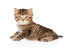 Baby british tabby kitten looking at camera. isolated. On white royalty free stock photography