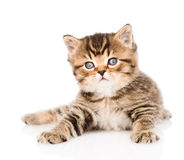 Baby british tabby kitten lying in front. isolated Stock Image