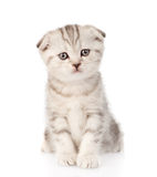 Baby british tabby kitten sitting in front. isolated. On white royalty free stock photos