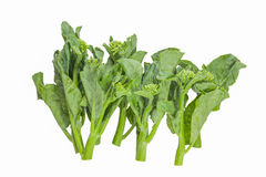 Baby broccoli isolated on white background. Baby broccoli isolated on white background, Thailand Royalty Free Stock Images