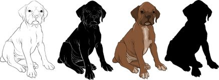 Puppy dog vector. Baby bulldog vector sitting on floor Royalty Free Stock Images