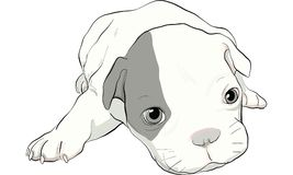 Puppy dog vector Stock Images