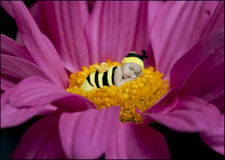 Baby Bumblebee. Baby girl dressed as a bee dreaming way on top of a flower Stock Photos