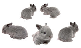 Baby Bunnies. Bunnies on a white background hopping everywhere Stock Images
