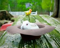Baby Bunny Stock Photography