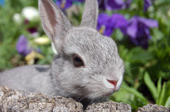 Baby bunny stock photos