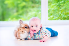 Baby and bunny. Adorable little baby playing with a funny real bunny on the floor in a white sunny room with a big garden view window stock photos