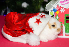 Baby bunny with santa hat and christmas house Royalty Free Stock Photography