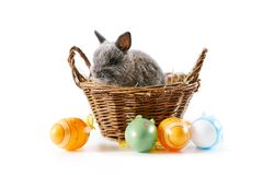 Cute baby bunny in basket for Easter. Baby bunny sitting in baskted with Easter eggs on white table. Isolated Royalty Free Stock Photo