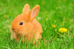 Baby bunny sitting in spring grass Royalty Free Stock Photography