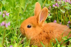 Baby bunny sitting in spring grass Stock Image