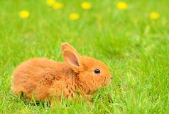 Baby bunny sitting in spring grass Stock Photography