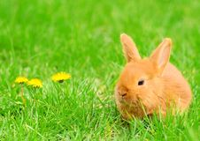 Baby bunny sitting in spring grass Stock Photos