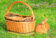 Baby bunny sitting in spring grass Stock Photo
