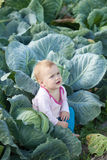 Baby  in  cabbage plant. Baby sitting in  cabbage plant Stock Images