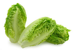 Baby cabbages Stock Photos