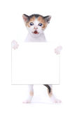 Baby Calico Kitten With Surprise Expression On White Background Stock Photography