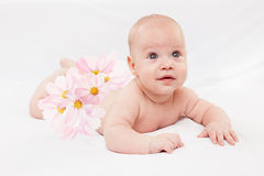 The baby with camomiles Royalty Free Stock Photography