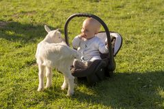 Baby in the carseat and little goat on grass. Baby in the car seat and little goat on grass Stock Photo
