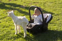 Baby in the carseat and little goat on grass. Baby in the car seat and little goat on grass Royalty Free Stock Photos