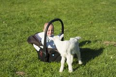 Baby in the carseat and little goat on grass. Baby in the car seat and little goat on grass Royalty Free Stock Photography
