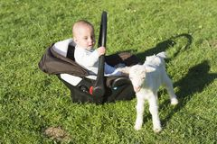 Baby in the carseat and little goat on grass play. Baby in the car seat and little goat on grass playing Royalty Free Stock Photography