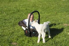 Baby in the carseat and little goat on grass play. Baby in the car seat and little goat on grass playing Stock Image