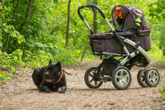 Baby carriage and dog Royalty Free Stock Image